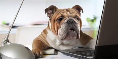 Come registrare il cane all'Anagrafe Canina Nazionale?