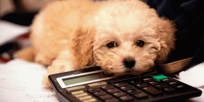 Cómo calcular la edad de un perro en años humanos