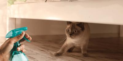¿Es malo castigar a un gato con el aspersor de agua?