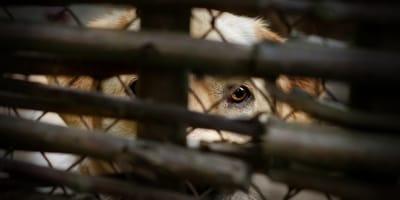 Rescatan a 55 perros de un criadero clandestino en Corrientes