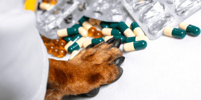 Pootje van hond tussen verschillende medicijnen