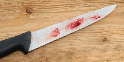 En el corazón de Europa: un país autoriza el sacrificio y consumo de carne de perro y gato