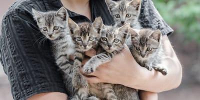Cos'è l'Animal Hoarding, l'accumulo compulsivo di animali?