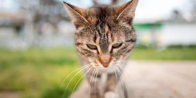 Cosa fare quando il gatto vomita giallo?