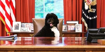 5 snaps that prove Bo was the best ever Presidential Pup