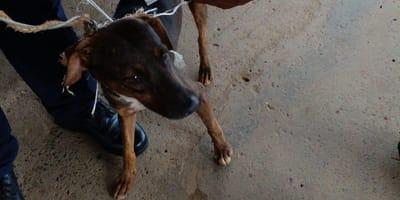 Narcogato no actuaba solo: detienen al perrito que llevaba los recados