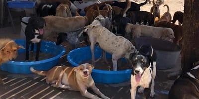 Perritos de Ciudad Juárez se mueren de sed y esta es la forma de ayudarlos