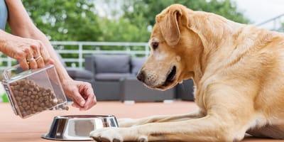 Karma dla psa z dobrym składem, czyli jak czytać etykiety?