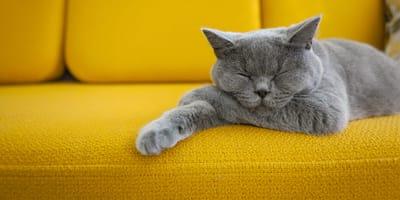 Czy zachowanie kota zmienia się po kastracji? Wyjaśniamy