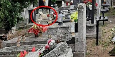 Aparece en el cementerio y se dedica a pasear entre las tumbas: ¿por qué?