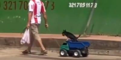 Hombre de Barranquilla pasea a perro en auto de juguete