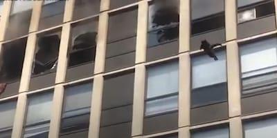 Gatto sfugge ad un incendio saltando da un grattacielo (Video)