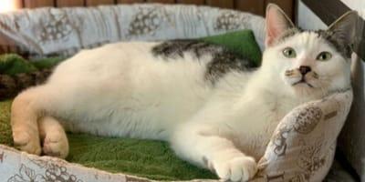 Giulietto, gatto adorabile, ma che somiglia a qualcuno di meno tenero!