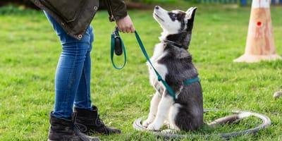 Cani e obedience: un binomio perfetto (Intervista)