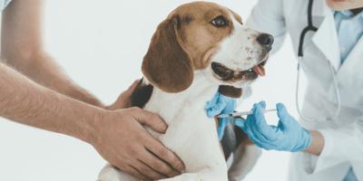 ¿Dónde se pueden conseguir vacunas para perros gratis y cuáles son?