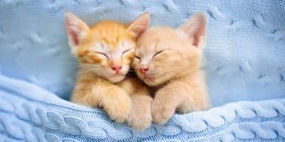 Come capire se un gatto è maschio o femmina? Ecco il metodo!