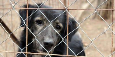 """Do schronisk trafia coraz więcej psów. Tłumaczenie """"opiekunów"""" jest absurdalne"""