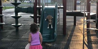 Das Kind will, dass der Welpe auch rutscht.