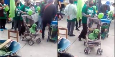 Pintan de verde a un perrito solo por apoyar a un candidato en Puebla