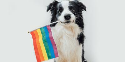 Hund mit Regenbogenflagge