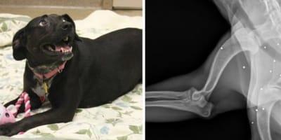 Perra va a hacer una radiografía: el veterinario se queda en shock con el resultado