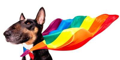 Perros gays: ¿existen realmente o es un mito?