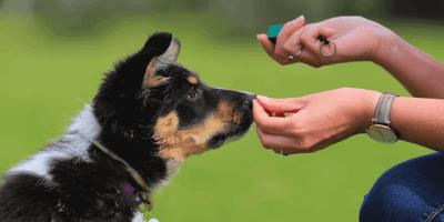 Hundeführerschein bald Pflicht? Das müssen Hundehalter jetzt wissen