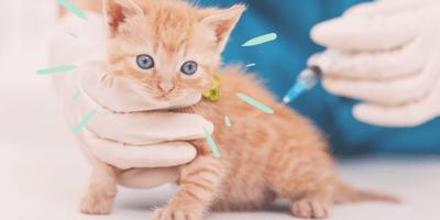 Precios en México de las vacunas para gatos