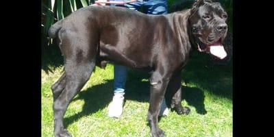 Dirty Beauty: il progetto dell'Oipa per i cani vittime di ingiustizie