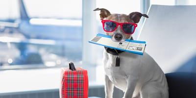 Requisitos para llevar a un perro de Colombia al extranjero