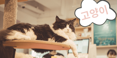 Más de 150 nombres coreanos para gatos y su significado