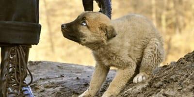 Bange hond wordt beetgepakt