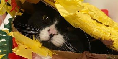 Hobby tego kota jest tak niebezpieczne, że opiekun musiał przygotować specjalny znak ostrzegawczy