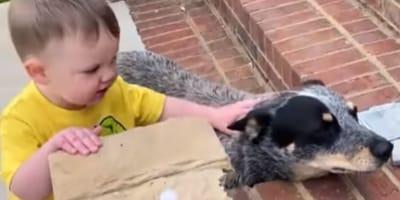 Junge lernt Laufen mit Hund