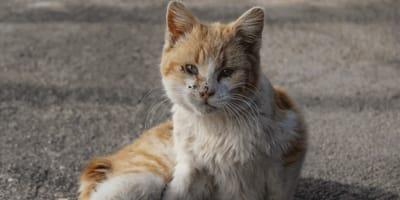 Krankes rotes Kätzchen