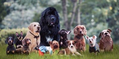 Quali sono gli standard per le razze di cani?