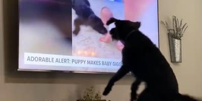 Hund sieht sich selbst im TV und gerät vollkommen außer sich! (Video)
