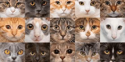 Collages van verschillende kattensnuiten