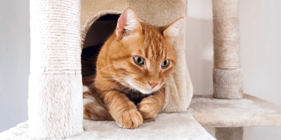 Je huis 'kat klaar' maken: Benodigdheden en andere weetjes