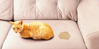 ¿Por qué mi gato marca el territorio en toda la casa?