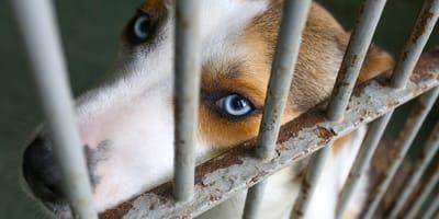 ¿Cómo denunciar el maltrato animal en Colombia?