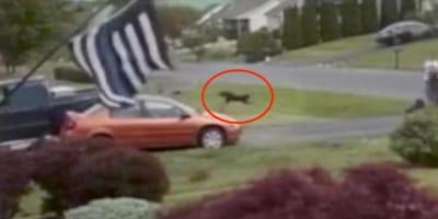 Ujęcie z kamery biegającego w oddali psa.