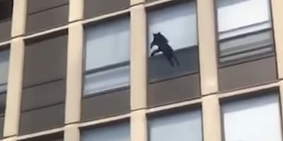 Cat jumping from burning building