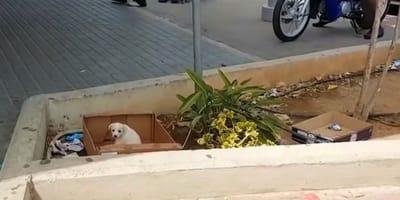 cucciolo-bianco-abbandonato-in-un-cartone