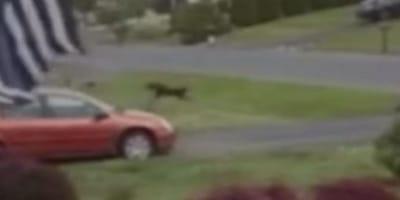 cane-nero-sollevato-dal-vento