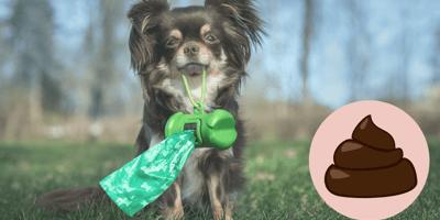 Mitos sobre la caca de perro: ¿de verdad hay que recogerla?