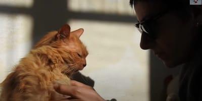 Życie tej 17-letniej kociej staruszki po śmierci opiekuna zamieniło się w koszmar. Wtedy zdarzył się cud