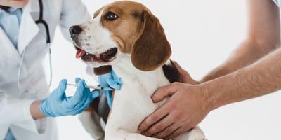 ¿Qué vacunas debe tener un perro en Colombia?