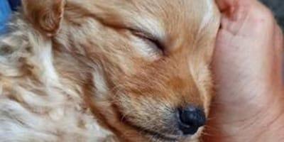 Una foto straziante rivela la realtà del commercio illegale di cuccioli