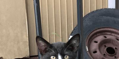 Katten kunnen bijzondere vachtpatronen hebben